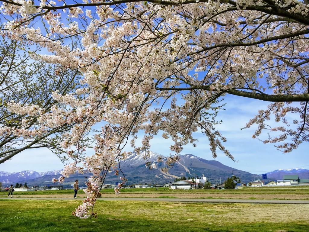 桜と磐梯山